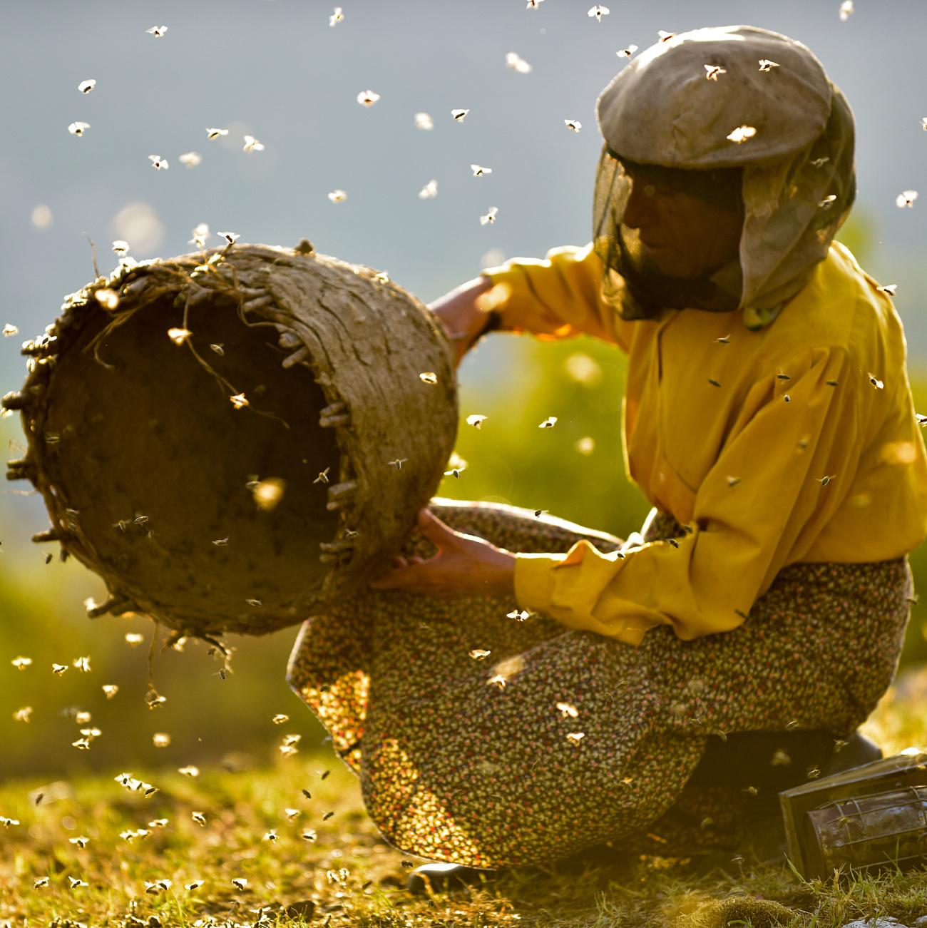 Sundance-nagydíjas makedón filmmel, aMéz-királynővel nyit a BIDF